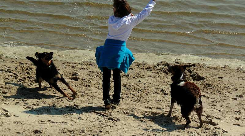 Frau mit Hunden am Strand