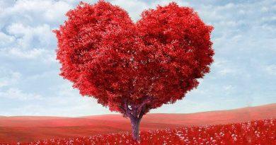 Romantik pur: So schön wird der Valentinstag 2017