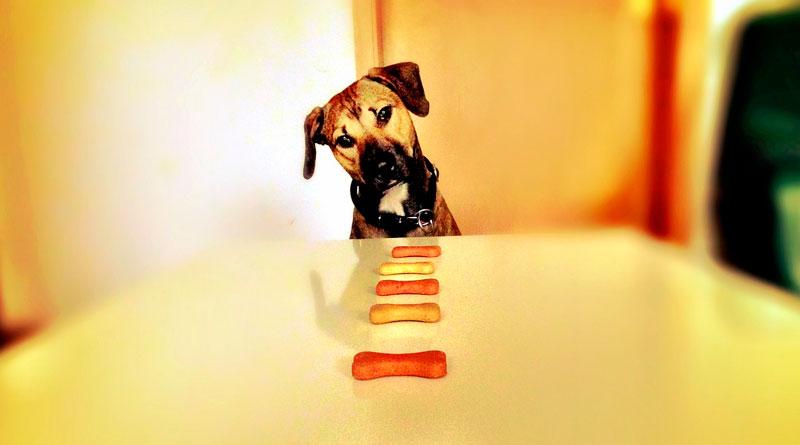 Hund schaut auf Tisch voller Knochen