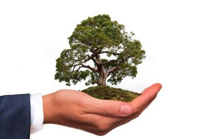 Baum in einer schützenden Hand
