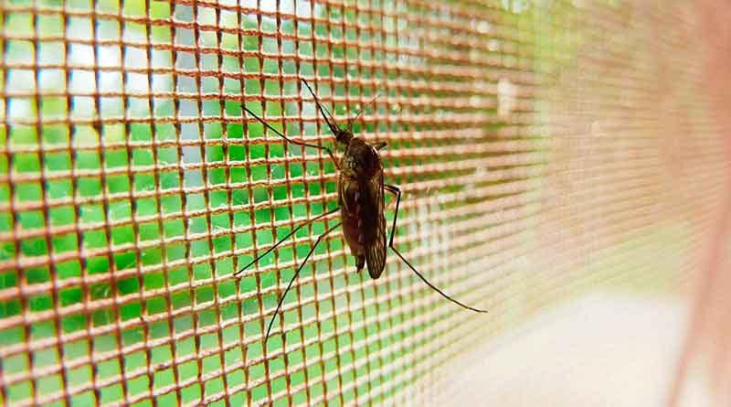 Kakerlake an Fliegengitter