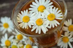 Kamillenblüten in einm Teeglas