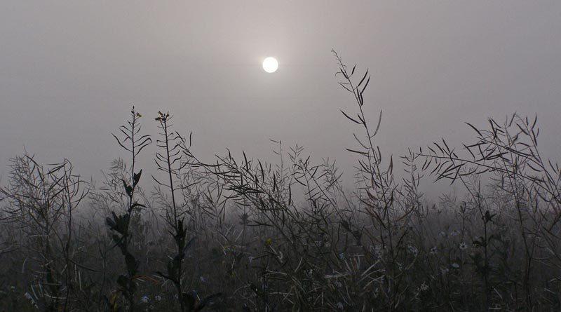 Gräser im Nebel