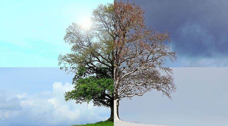 Baum im Laufe der Jahreszeiten