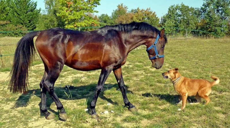 Pferd und Hund begegnen sich auf einer Koppel